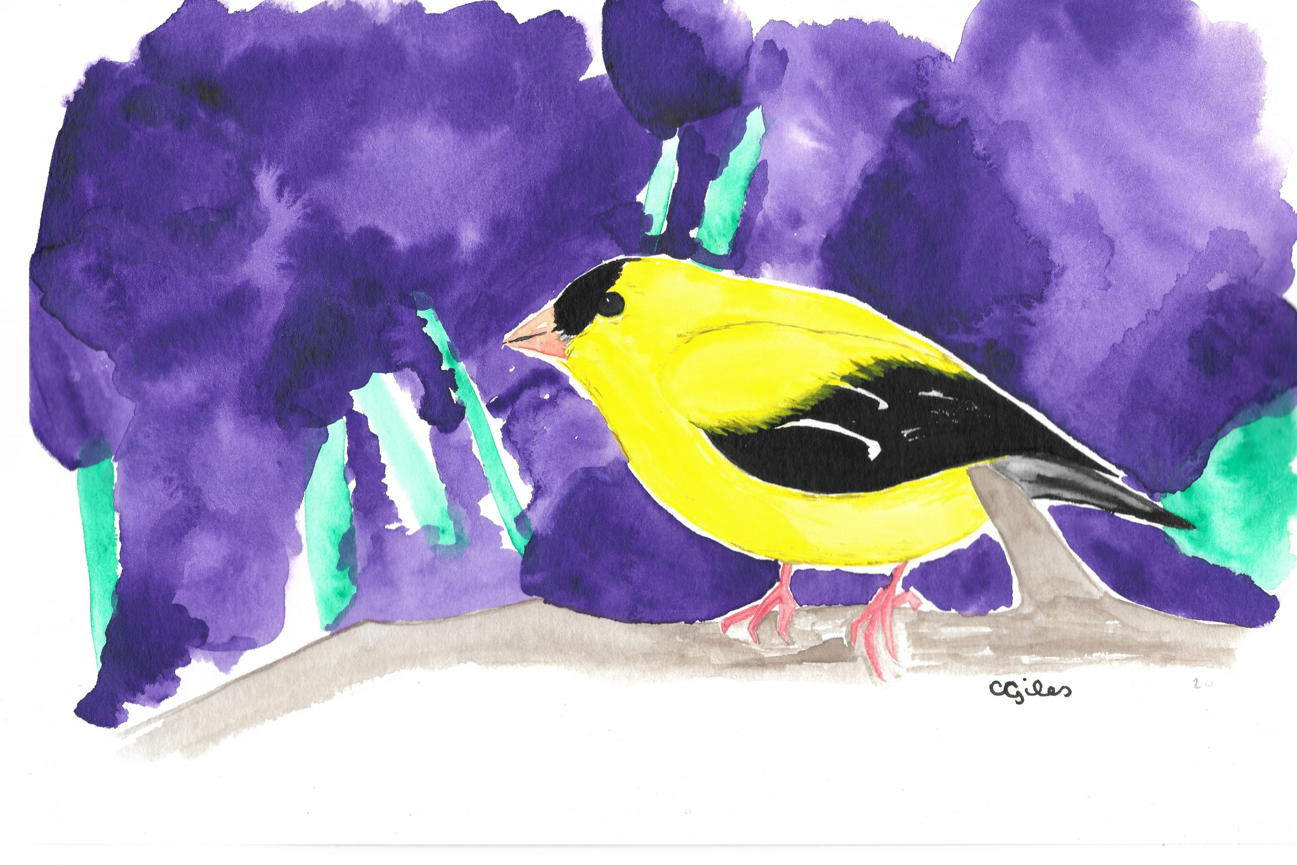 Watercolor: American Goldfinch against an absurdly purple background.