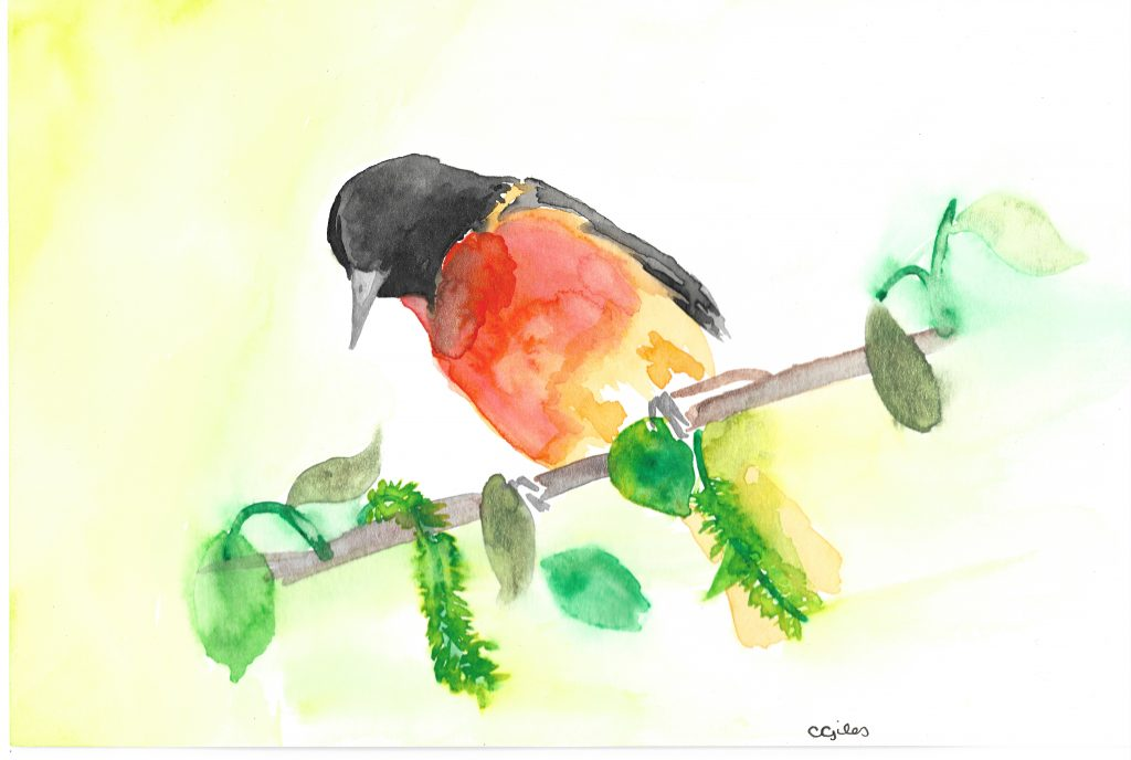 Watercolor: A Baltimore oriole against a yellow-green backdrop.