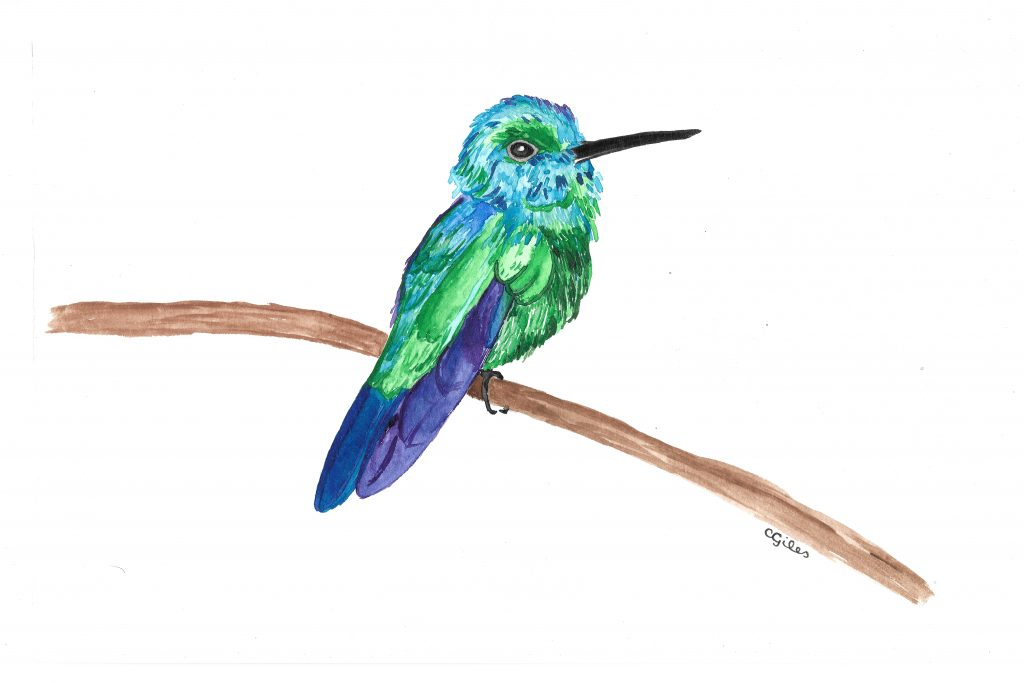 Watercolor: A blue-tailed emerald hummingbird that is probably not proportional.